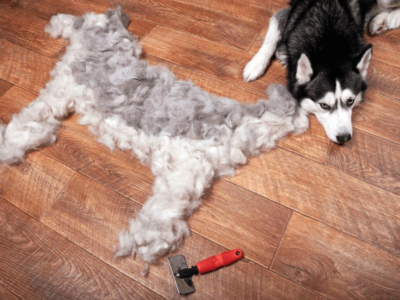 毛・ゴミがよく取れる洗濯機を、教えてください。当方、犬猫を5匹... - Yahoo!知恵袋