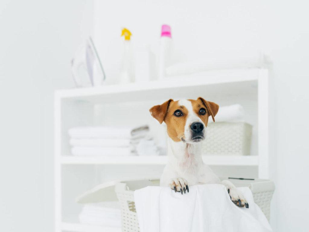 ペット用品を洗濯するときのコツとおすすめの洗剤と便利アイテム