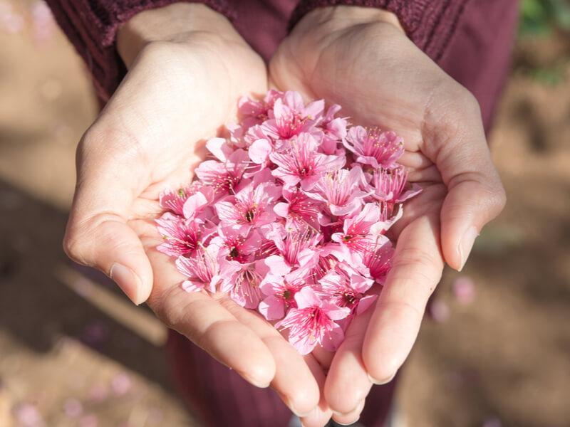 春は桜の季節!今年も桜の香りがする柔軟剤が続々発売!