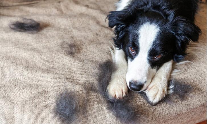 ペットの毛を掃除して快適な空間を作ろう