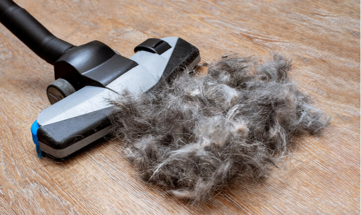 ペットの毛の掃除におすすめの掃除機5選