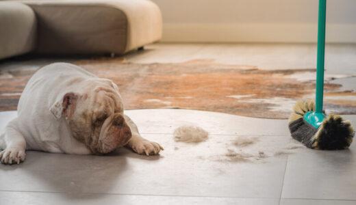 ペットの毛を掃除する方法を場所別に解説!おすすめ掃除機・ローラー・ブラシもご紹介